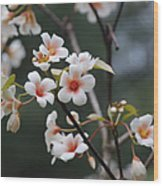 Tung Oil Blossoms Wood Print