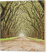 Tunnel In The Trees Wood Print