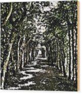 Tunnel Of Trees ... Wood Print