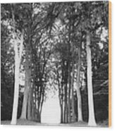 Tunnel Of Trees Wood Print