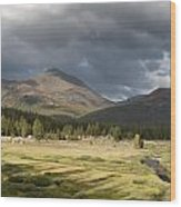Tuolumne Meadows In Yosemite National Park Wood Print