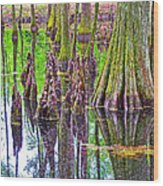 Tupelo/cypress Swamp Reflection At Mile 122 Of Natchez Trace Parkway-mississippi Wood Print