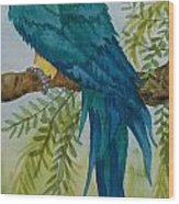 Turk Macaw Wood Print