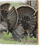 Turkey Butt Strut Wood Print
