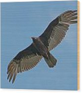 Turkey Buzzard 1 Wood Print