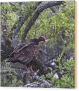 Turkey Buzzard Wood Print