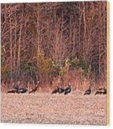 8964 - Turkey - Eastern Wild Turkey Wood Print