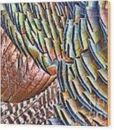 Turkey Feather Colors Wood Print