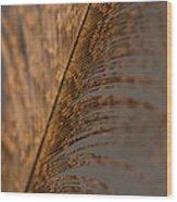 Turkey Feather Wood Print