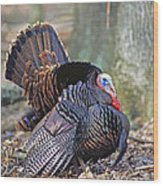 Turkey Gobbler Strut Wood Print
