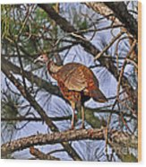 Turkey In A Tree Wood Print by Al Powell Photography USA