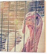 Turkey In The Cage Wood Print