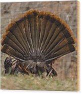 Turkey Tail Wood Print
