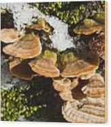 Turkey Tail Bracket Fungi Wood Print