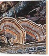 Turkey Tail Fungi In Autumn Wood Print