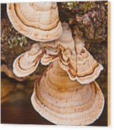 Turkey Tail Fungus 5 Wood Print