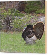 Turkey Trot Wood Print