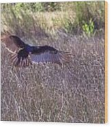 Turkey Vulture 2 Wood Print