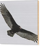 Turkey Vulture In Flight Wood Print by Thomas Young