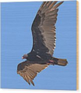 Turkey Vulture Soaring Overhead Drb153 Wood Print