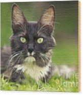 Turkish Angora Cat Wood Print