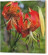 Turkish Cap Lily  Wood Print