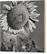 Turkish Sunflower 3 Wood Print