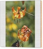 Turks Cap Lilies And Butterfly Wood Print