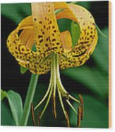 Turk's Cap Lilly Wood Print