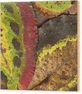 Turning Leaves 2 Wood Print