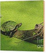 Turtle-190 Wood Print
