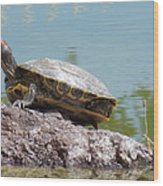 Turtle At The Lake Wood Print