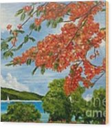 Turtle Bay Virgen Islands Wood Print