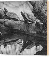 Turtle Bffs Bw By Denise Dube Wood Print