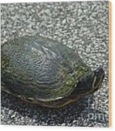 Turtle Crossing Wood Print