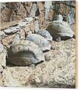 Turtle Desert Wood Print