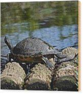 Turtle Float Wood Print