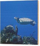 Turtle Flying Underwater Wood Print