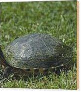 Turtle Grass Wood Print