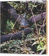 Turtle In The Glades Wood Print