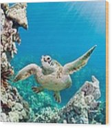 Turtle In Tropical Ocean Wood Print