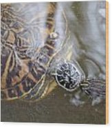 Turtle Kiss Wood Print by Julie Cameron