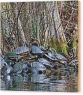 Turtle Landing Wood Print