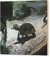 Turtle - National Aquarium In Baltimore Md - 121218 Wood Print