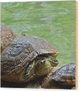 Turtle Ninjas Wood Print