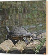 Turtle On A Raft Wood Print