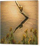 Turtle On Golden Pond Wood Print