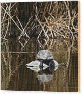 Turtle On Turtle Wood Print by Ernie Echols