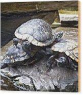 Turtle Rant Wood Print