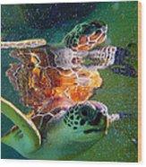 Turtle Reflection Wood Print